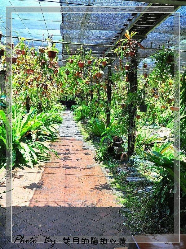 宜蘭員山—波的農場—千奇百怪食肉草,小型熱帶雨林植物館 @民宿女王芽月-美食.旅遊.全台趴趴走