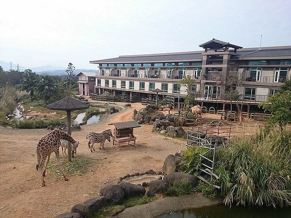 新竹關西六福莊生態渡假旅館草原歷險長頸鹿環尾狐猴