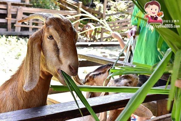 桃園中壢景點-羊世界牧場-小朋友的動物天堂,餵羊坐小火車也可以溜小孩 @民宿女王芽月-美食.旅遊.全台趴趴走