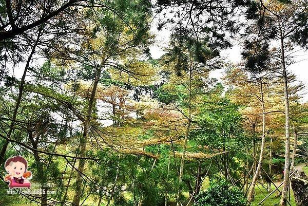 桃園復興景點-桃源仙谷-全台唯一黃金楓景點,現在正好免費入園參觀,有線上預約 @民宿女王芽月-美食.旅遊.全台趴趴走