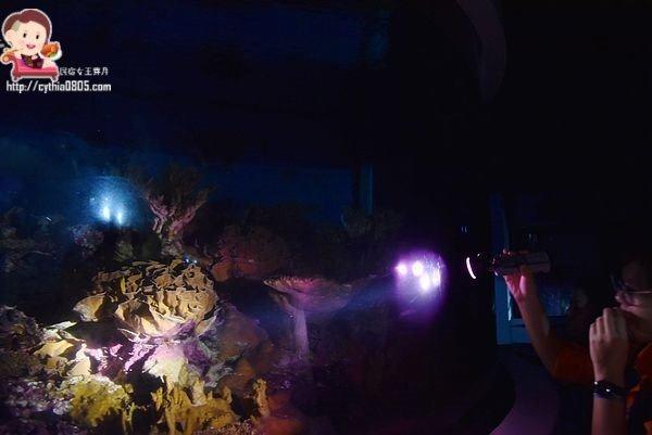 DIY,一泊三食,夜宿海生館,夜間導覽,小白鯨,海底隧道,珊瑚王國,親子小旅行 @民宿女王芽月-美食.旅遊.全台趴趴走