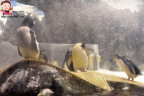 屏東住宿-夜宿海生館 (下)-那一夜,小白鯨與我們一同入眠 @民宿女王芽月-美食.旅遊.全台趴趴走