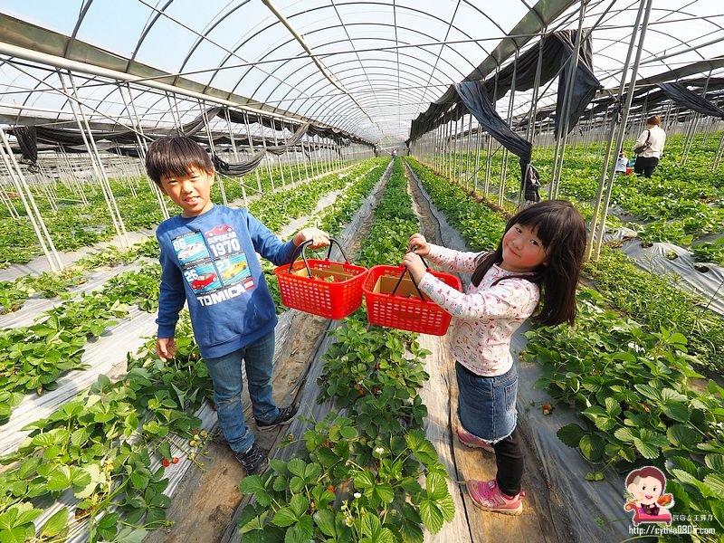 最新推播訊息:想採草莓不用跑大湖了,大溪就有!!