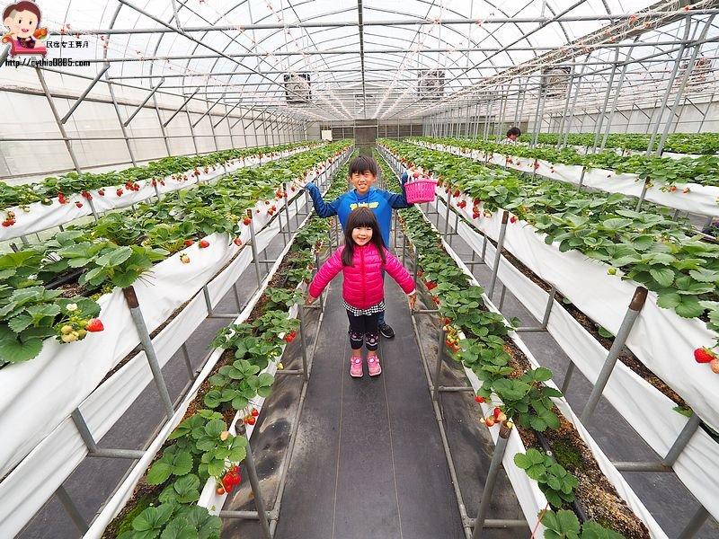 桃園平鎮景點-上日有機莓園-大馬路裡面的隱藏版草莓園,在地青農有用心