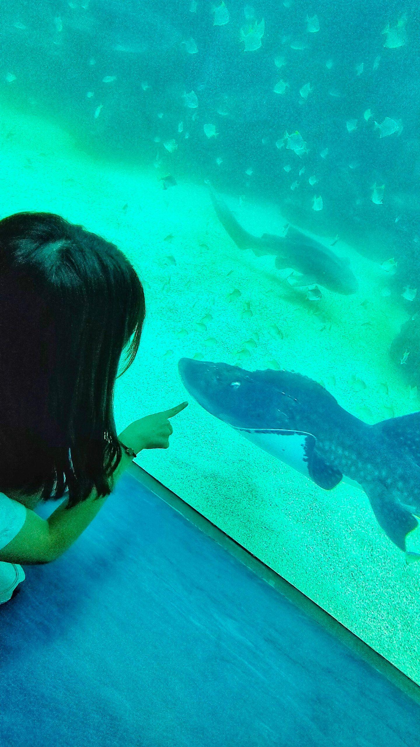 IG,KKDAY,Xpark,Xpark都會型水生公園,企鵝,八景島,新光影城,日本,水母,網美,親子互動,青埔水族館,鯊魚 @民宿女王芽月-美食.旅遊.全台趴趴走