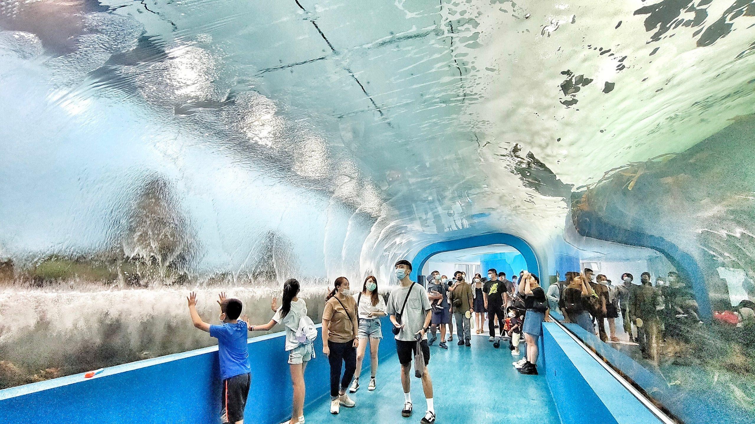 IG,KKDAY,Xpark,Xpark都會型水生公園,企鵝,八景島,新光影城,日本,水母,網美,親子互動,青埔水族館,鯊魚