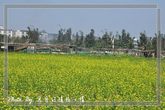 隨拍-2011年春季-這不是北海道,這裡是台灣! @民宿女王芽月-美食.旅遊.全台趴趴走