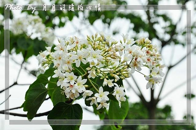 龍潭-土德利他農場-桐花祭開跑 @民宿女王芽月-美食.旅遊.全台趴趴走