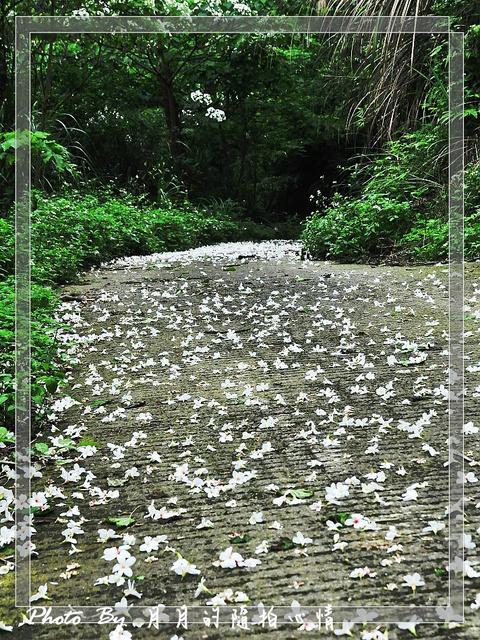 龍潭-2012桐花季(上)-帶著孩子一同體驗大自然 @民宿女王芽月-美食.旅遊.全台趴趴走