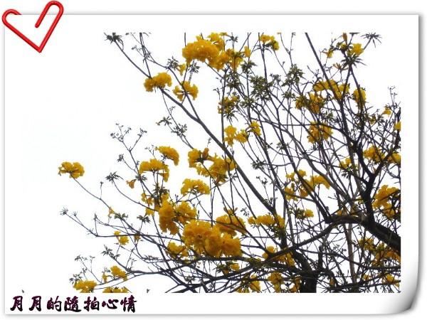 台南-令人佇立的美—東豐路(春季) @民宿女王芽月-美食.旅遊.全台趴趴走